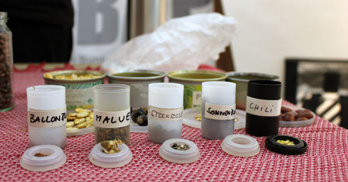 Zimmergarten: Das richtige Saatgut zum Beispiel von der Saatguttauschbörse