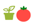 Tomatensaatgut selber machen