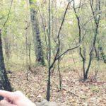 Aktion: Natur entdecken