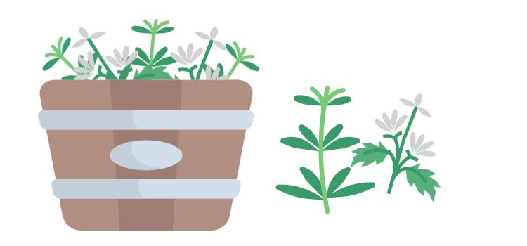 Pflanzenjauchen und -tees: Richtig ansetzen