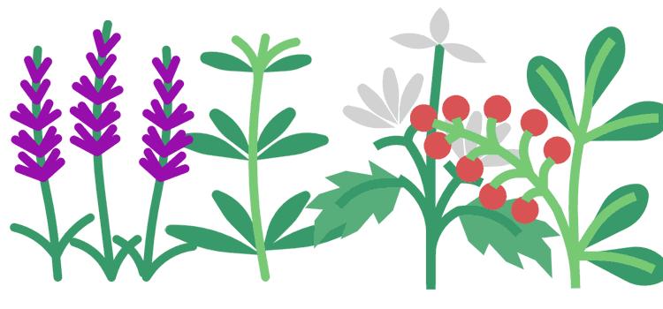 Pflanzenjauchen und -tees: Die richtigen Kräuter finden